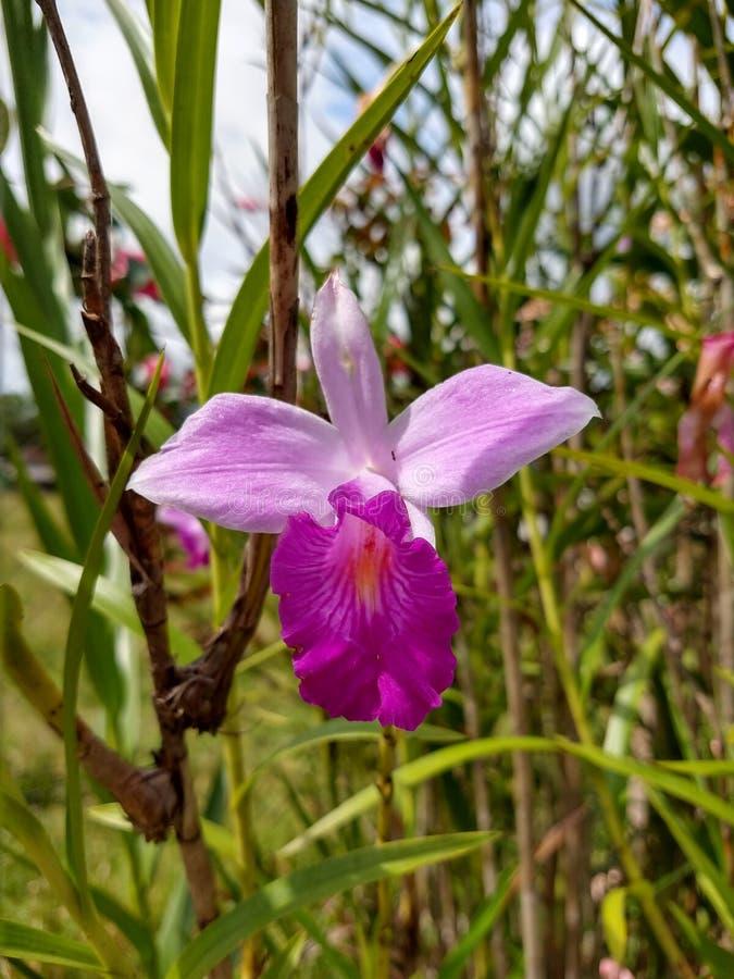 Van de de tuinaard van orchideebloemen botanische het landschapsaard royalty-vrije stock afbeeldingen