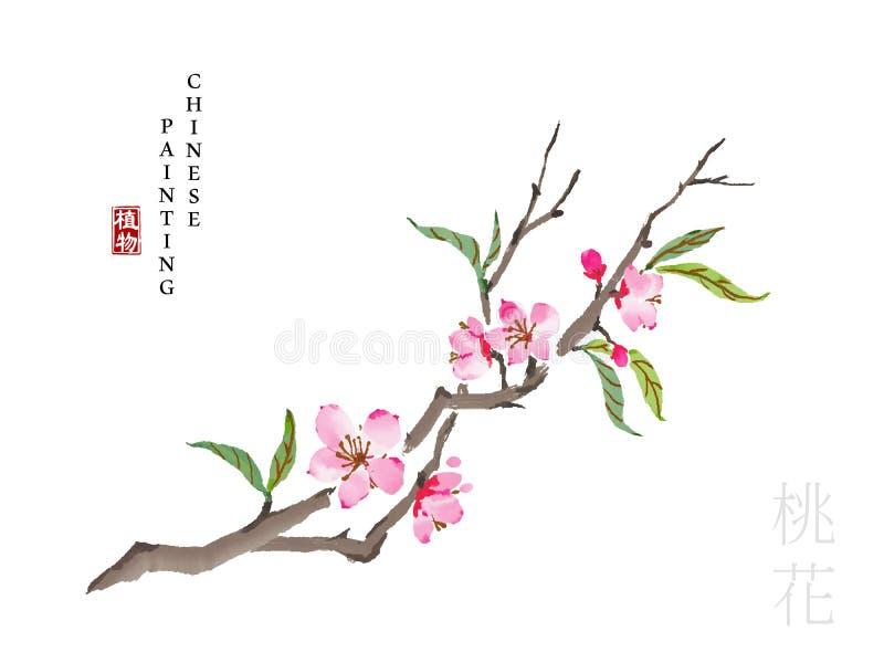 Van de de verfkunst van de waterverf de Chinese inkt installatie van de de illustratieaard van het Boek van de bloesem van de Lie vector illustratie