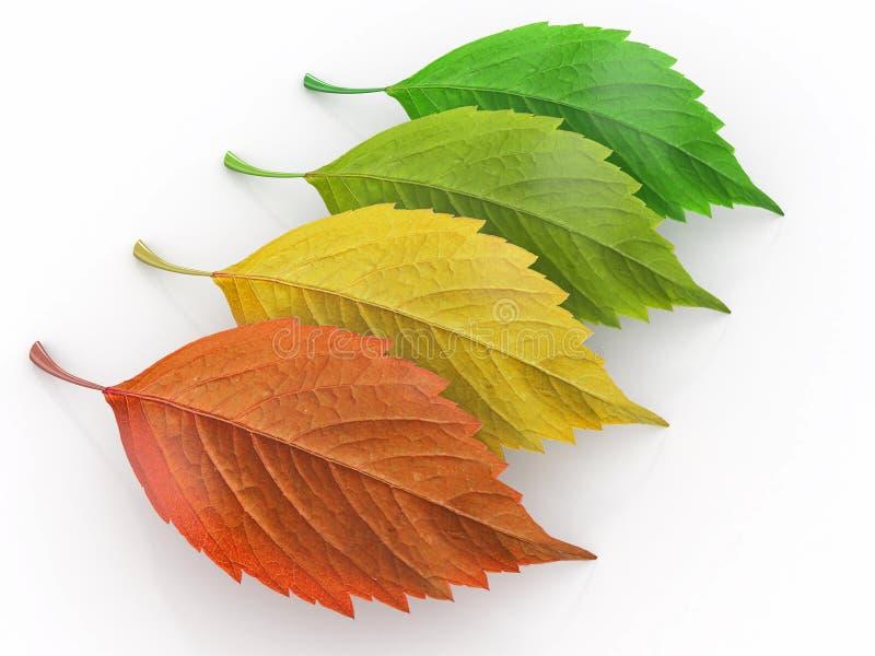 Van de vier seizoenen. Groen, rood en yeloow blad royalty-vrije illustratie
