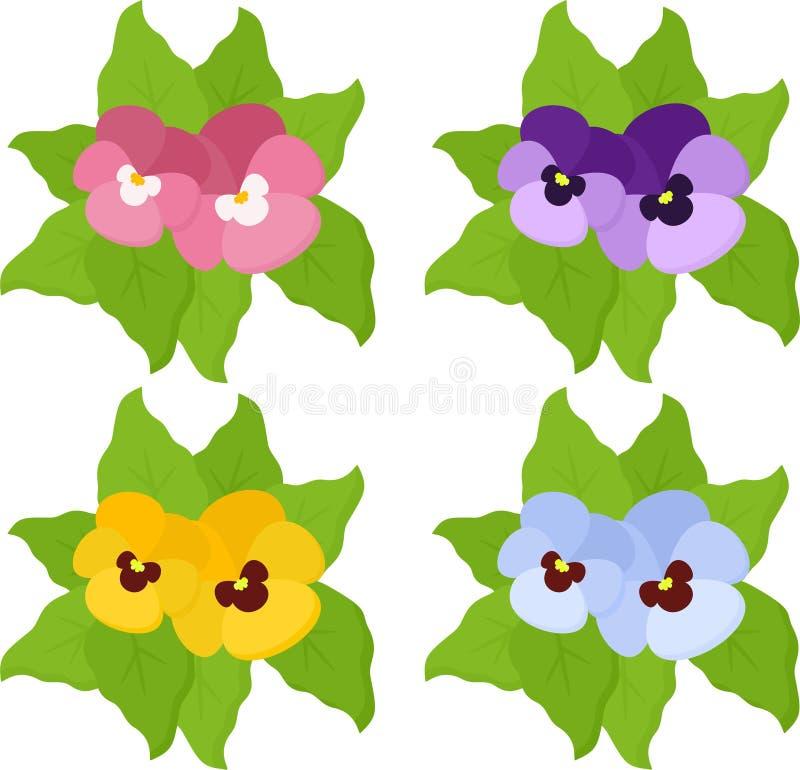Van de viooltjebloemen of lente tricolorinzameling van de tuinaltviool op witte achtergrond wordt geïsoleerd die Hoogste mening stock illustratie