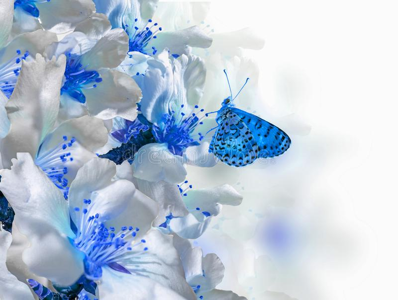 Van de vlinderbloemen van de amandelenboom macro de lenteachtergrond stock afbeelding