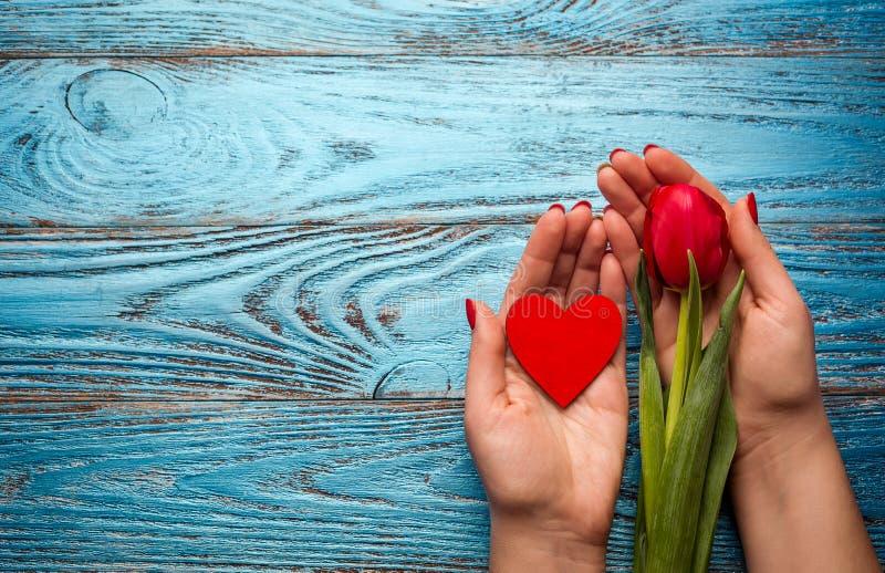 Van de de vrouwendag van de de lentemoeder rode de tulpen bloemen minimale backgrou van Pasen royalty-vrije stock foto