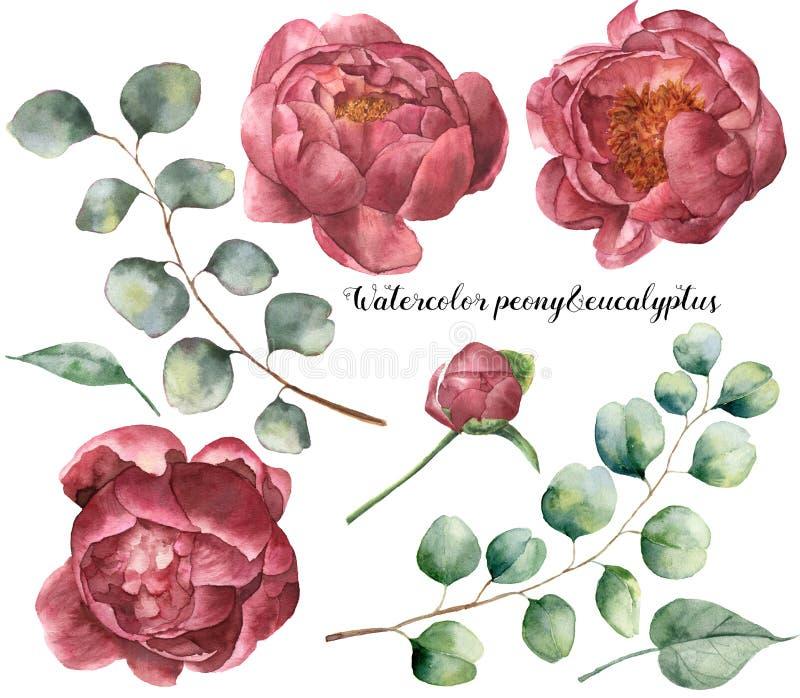 Van de waterverfpioen en eucalyptus reeks De hand schilderde bloemendieelementen met bloemen en eucalyptustak op wit wordt geïsol royalty-vrije illustratie