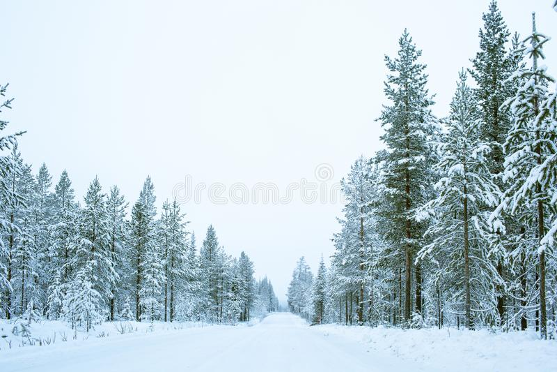 Van de wegweg en Pijnboom Bomen met Sneeuw aan de Kant in Laplan worden behandeld die royalty-vrije stock foto