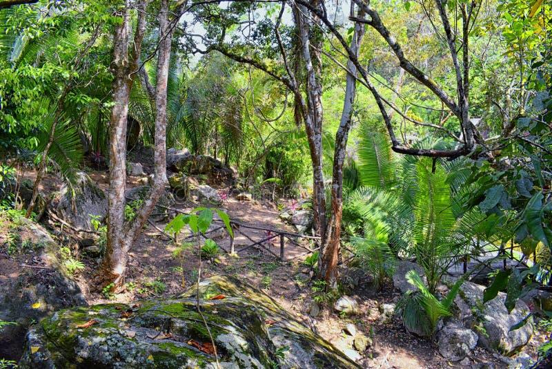 Van de wildernisrivier en waterval meningen van de landelijke kleine dorpsweg aan Gr Eden door Puerto Vallarta Mexico waar de fil stock fotografie