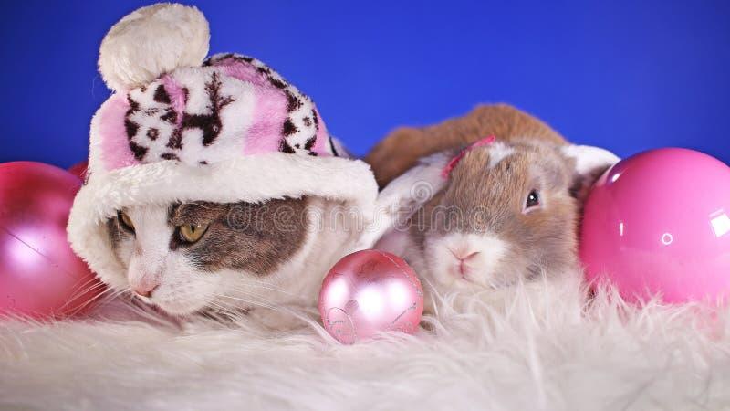 Van de winterhuisdieren van Kerstmisdieren van de de vriendenkat dierlijke het huisdieren leuke blauwe achtergrond stock foto's