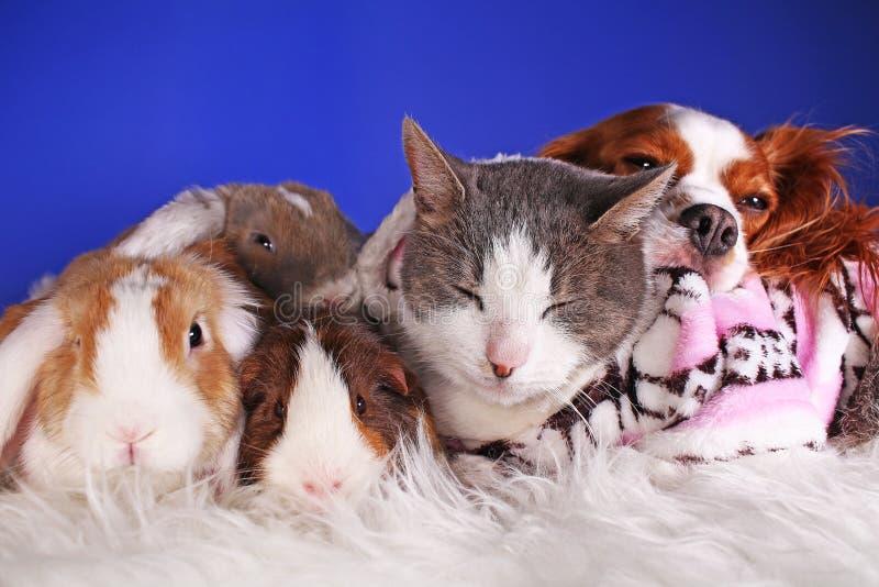 Van de winterhuisdieren van Kerstmisdieren van de de vriendenkat dierlijke het huisdieren leuke blauwe achtergrond royalty-vrije stock foto's
