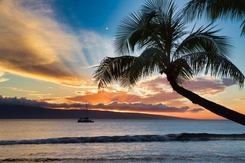 Van de zonsondergangoceaan en palm mening over Maui stock foto