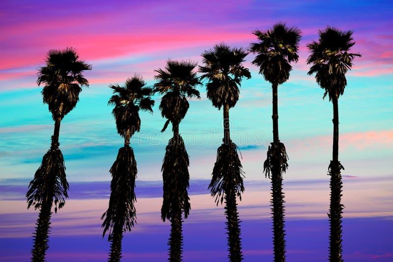 Van de zonsondergangpalmen van Californië washingtonia westelijke kust royalty-vrije stock fotografie