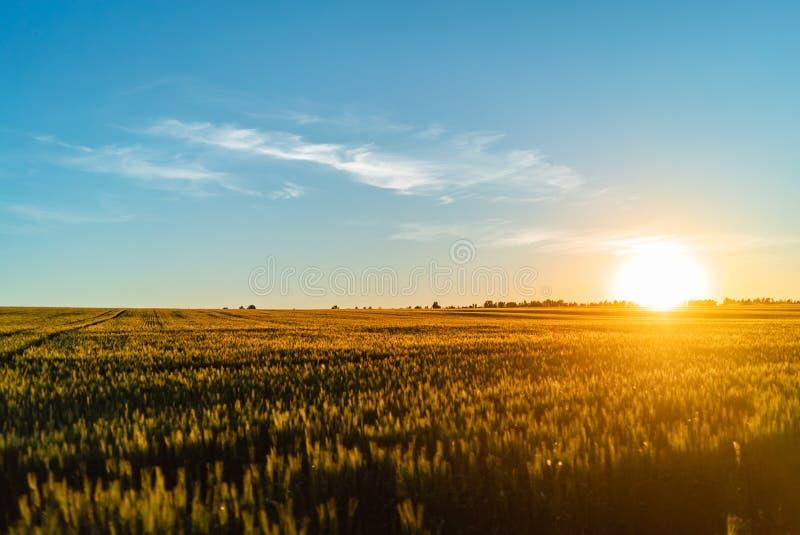 Van de zonsondergangrusland van de gebiedstarwe de aard van de de hemeluitgestrektheid stock afbeeldingen