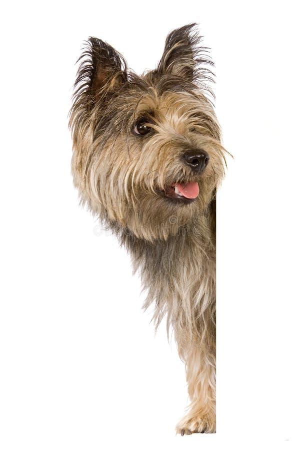 Van een hond banner