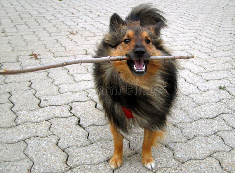 Download Van een hond stok stock afbeelding. Afbeelding bestaande uit halen - 290787