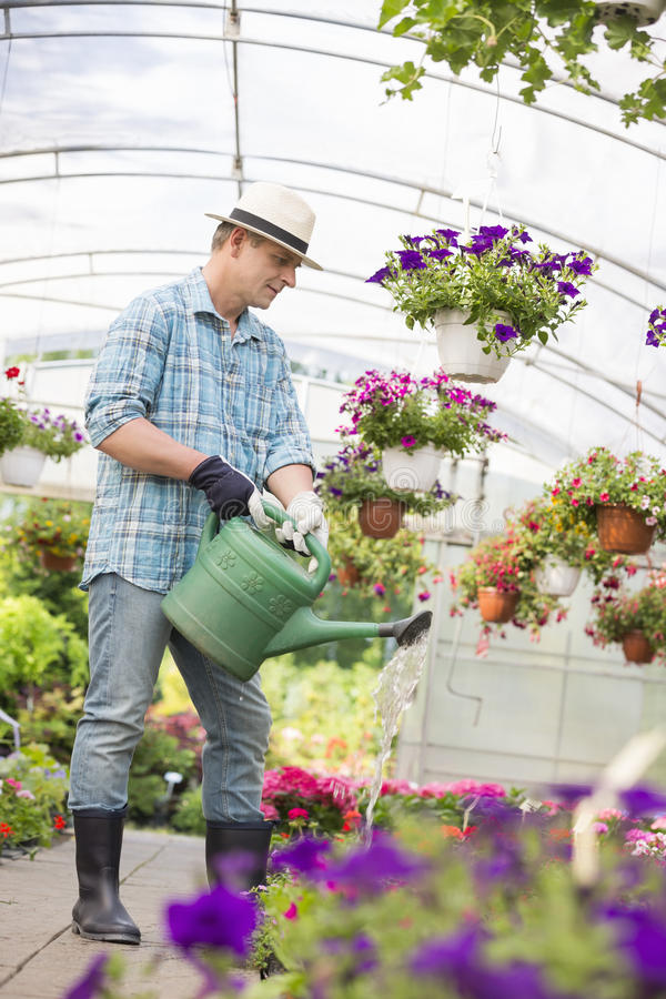 Van gemiddelde lengte van mens het water geven bloeminstallaties in serre stock afbeelding