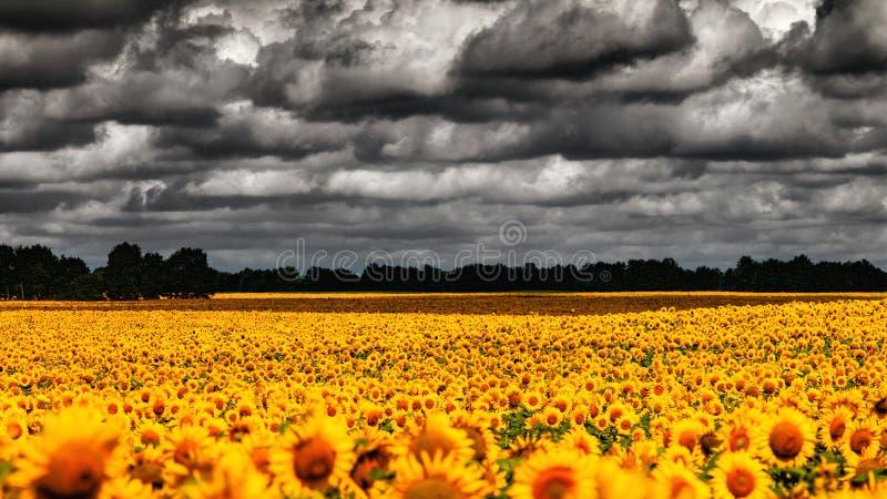 Van Gogh Summer. royalty-vrije stock foto's