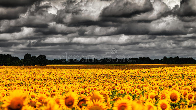 Van Gogh Summer. royalty free stock photos