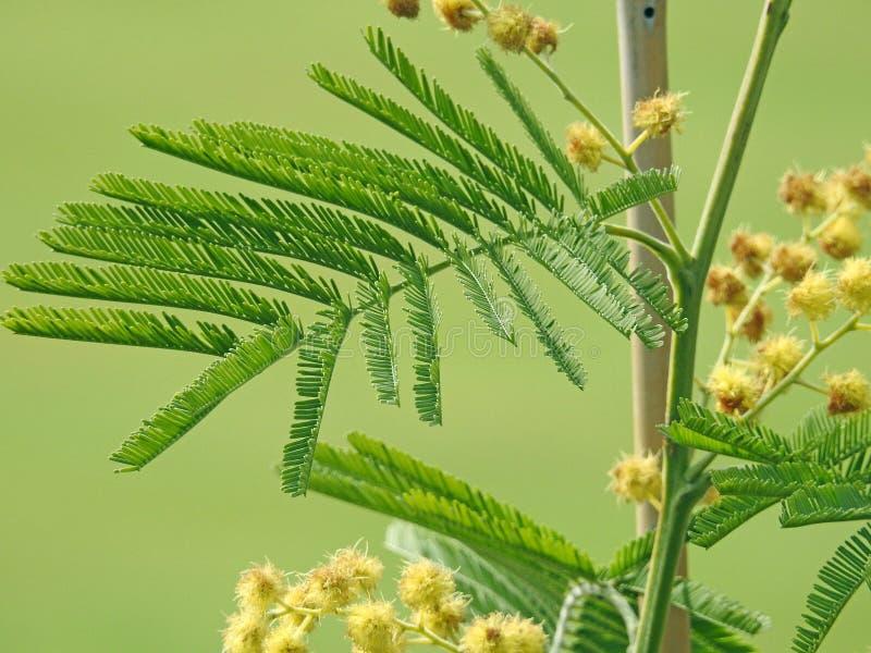 Van het bladinstallaties van varen netelige bladeren exotische wilde tropisch royalty-vrije stock foto's