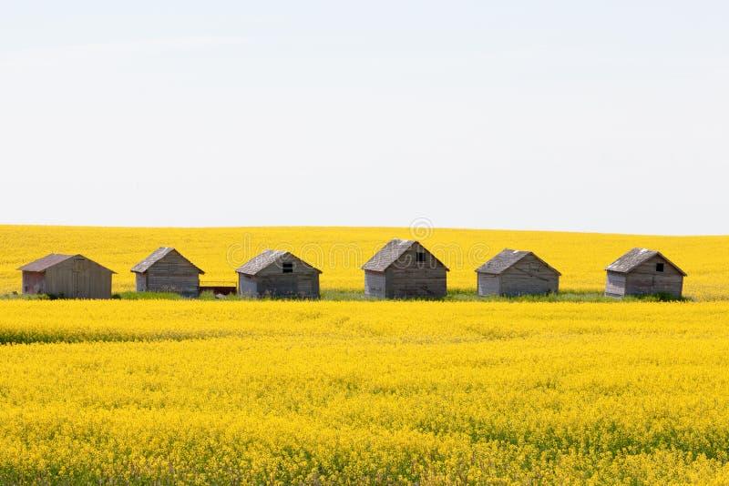 Van het canolagebied van landbouwbedrijfhutten de landbouwlandschap stock afbeelding