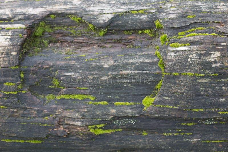 Van het de achtergrond boomstammos van de hartvorm gesneden boom de close-up conceptenliefde stock fotografie