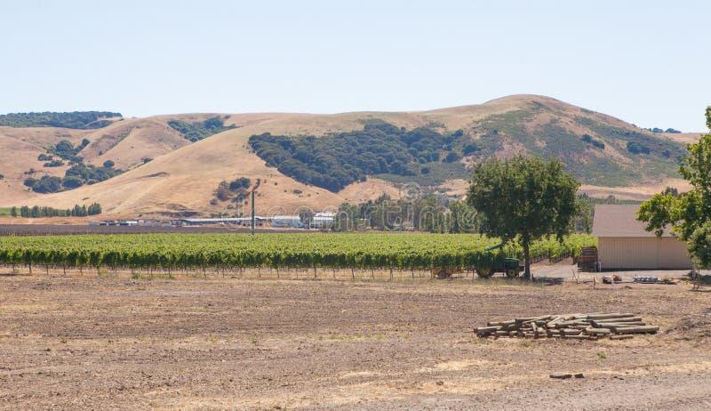 Van het de bergengebied van de gebiedenwijngaard de boomwijnmakerij stock fotografie