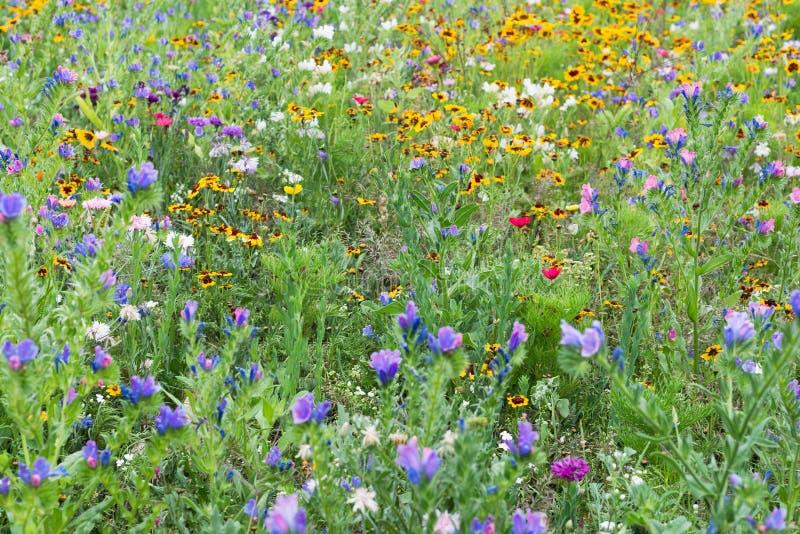 Van het de bloesemplatteland van de bloemweide wilde bloeiende het park diverse installaties stock foto