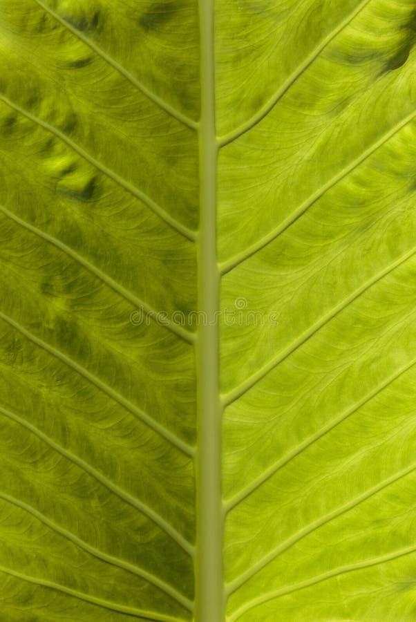 Van het de close-updetail van het de zomer groene blad mening als achtergrond royalty-vrije stock afbeeldingen