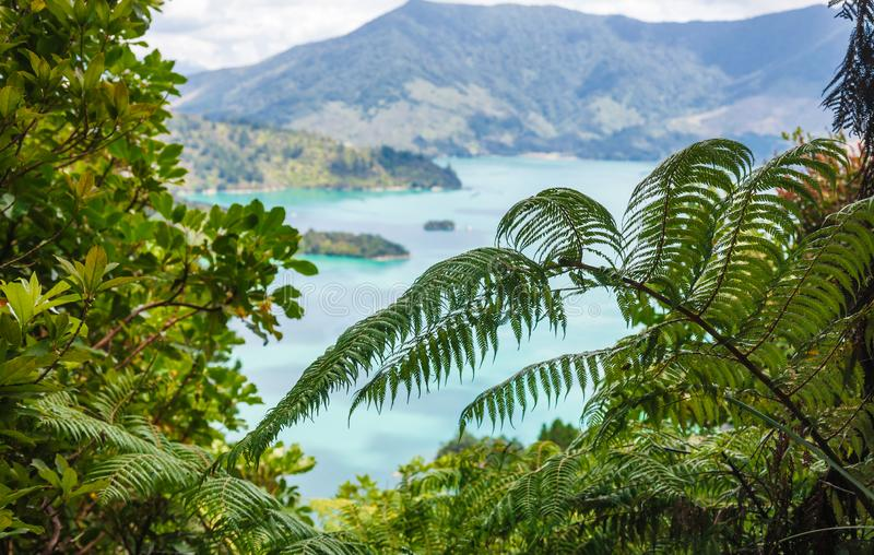 Van het de Geluidenzuiden van Marlborough van varenbladeren het Eiland Nieuw Zeeland stock fotografie