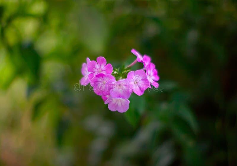 Van het de giftstilleven van de bloemenaard de de gelukwenszomer royalty-vrije stock afbeelding