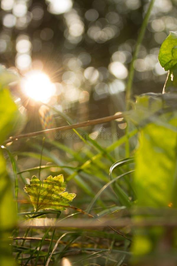 Van het de Kleurengebied van het bladgras Groene de Dauwochtend royalty-vrije stock afbeelding