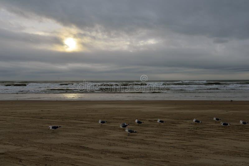 Van het de kuststrand van Californië het centrale slechte weer Pismostrand, de V.S. stock foto's
