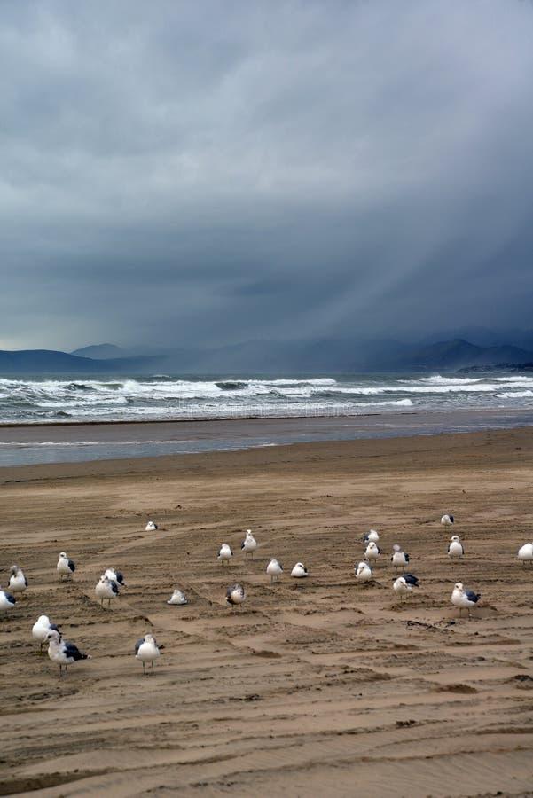 Van het de kuststrand van Californië het centrale slechte weer Pismostrand, de V.S. stock afbeelding