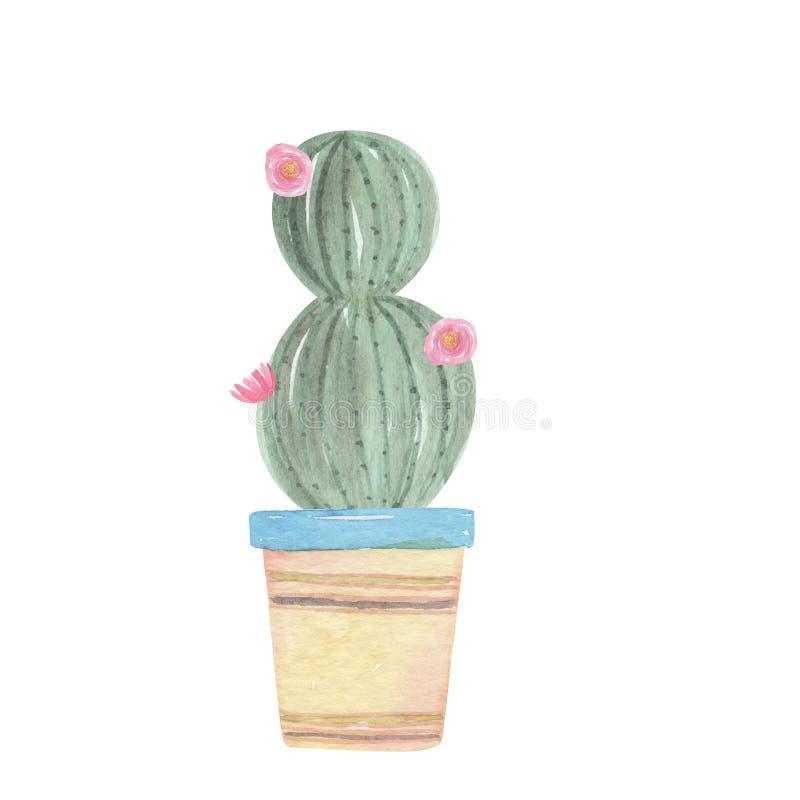 Van het de Pottenboeket van de waterverfcactus Roze Bloemen de Bloemencactussen stock illustratie