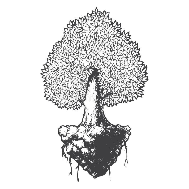 Van het de schetsbeeldverhaal van het boomleven zwart-witte de krabbel vectorillustratie stock illustratie