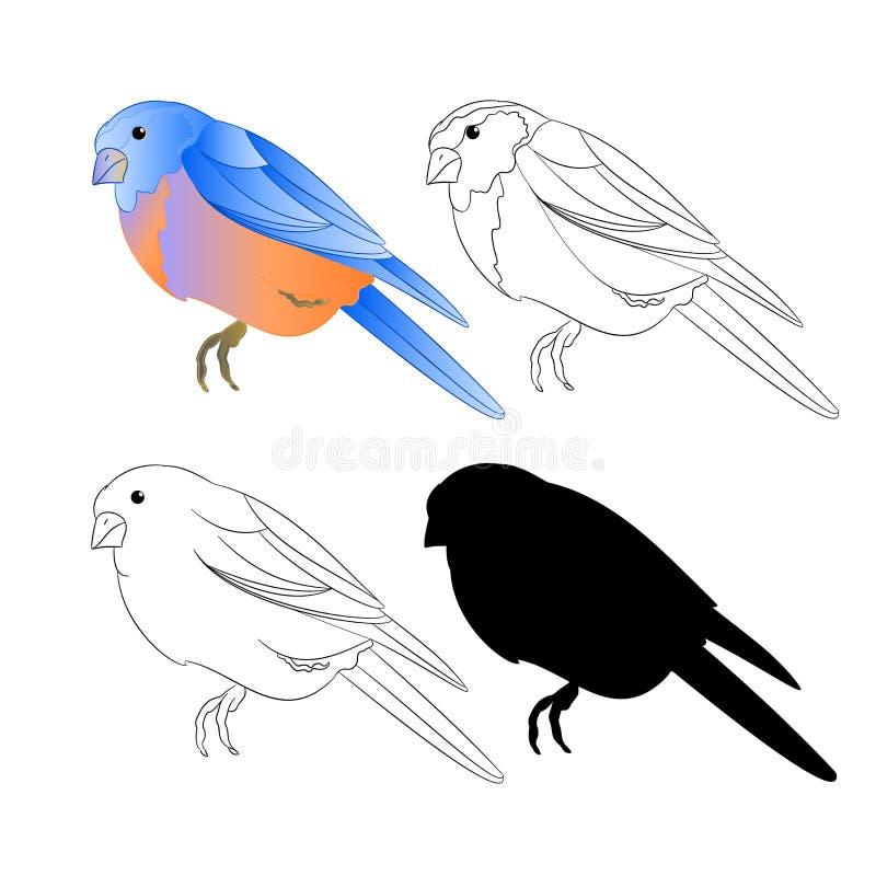 Van het de Sialiaoverzicht van de vogellijster de aard en het silhouet op een witte uitstekende vector editable illustratie als a stock illustratie