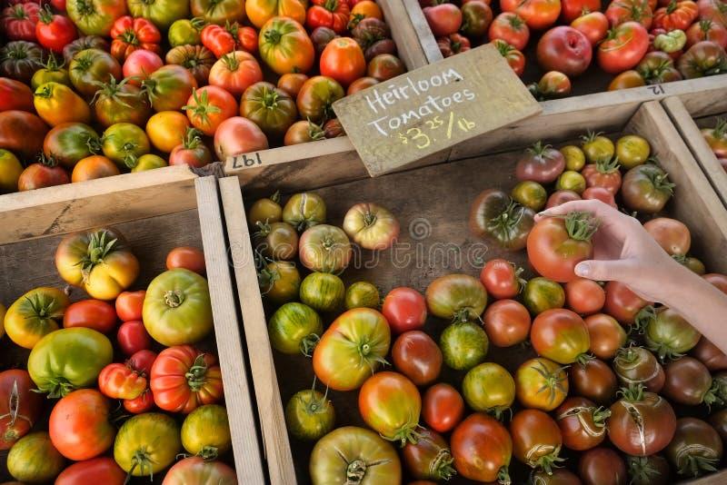 Van het de Tomatenerfgoed van de handholding de Verse Rijpe Tuin van de de Landbouwersmarkt PR royalty-vrije stock afbeeldingen