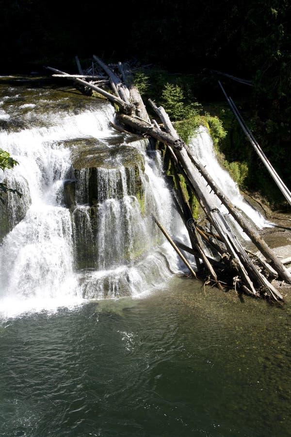 Van het de watervallenwater van de watervaldaling het witte bos stock foto's