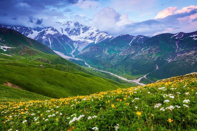 Van het gazon met bloemen opent een panorama stock foto