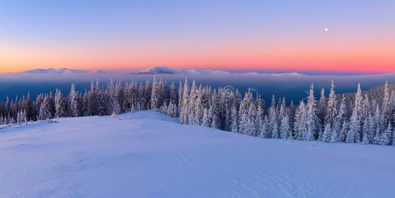 Van het gazon, met sneeuw wordt behandeld, een panorama van behandeld met vorstbomen, mist, lange, steile bergen die royalty-vrije stock fotografie