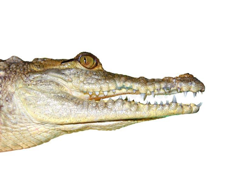 Van het het gezichtsportret van de krokodil het macrodetail stock fotografie