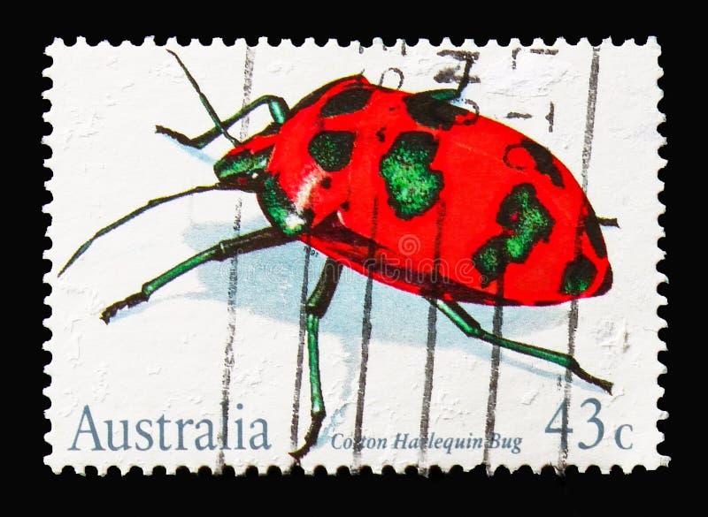 Van het katoenen diophthalmus van Tectocoris Harlekijninsect, Insecten serie, c royalty-vrije stock foto