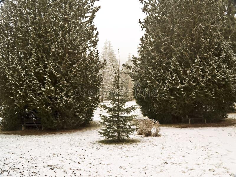 Van het park aan de bos een kleine boomwachten de ingang. royalty-vrije stock afbeelding
