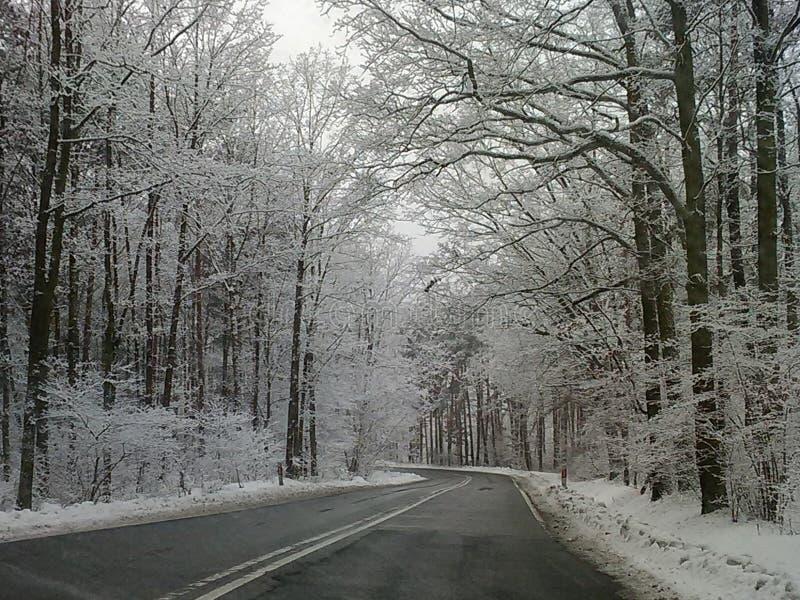 Van het het seizoenklimaat van de de wintersneeuw van het de vakantie de Nieuwe jaar walrus van Carnaval stock afbeeldingen