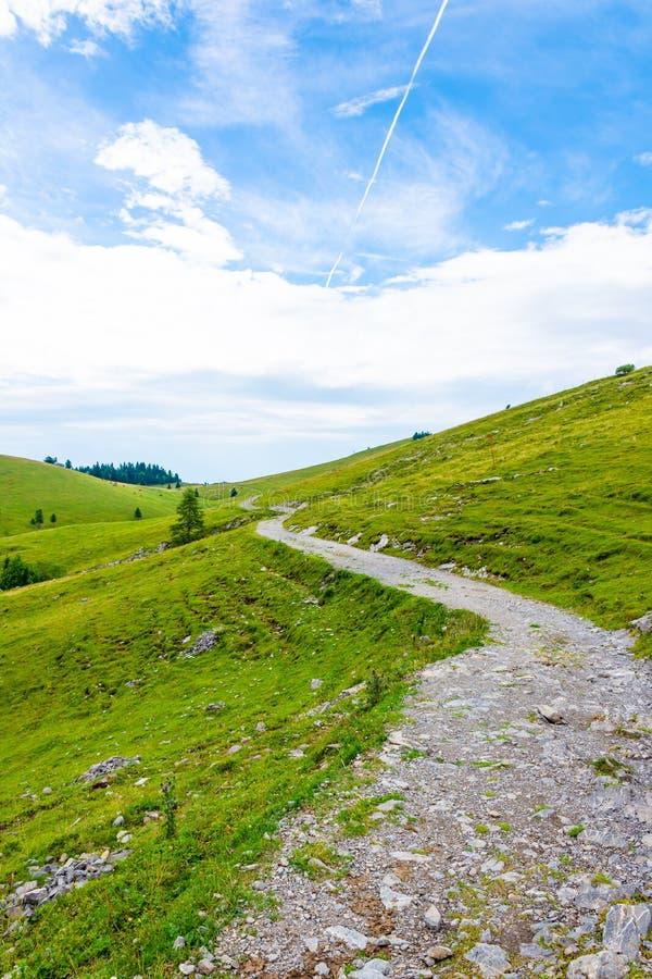 Van het het weiland grote plateau van Slovenië velikaplanina Koeien op het weiland in de Alpen van Slovenië Groen gras, verse aar royalty-vrije stock foto's
