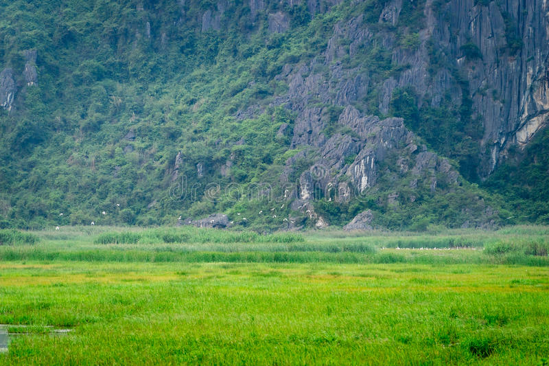 Van Long Reserve όπου πάρτε τον κινηματογράφο Kong: Νησί κρανίων στοκ φωτογραφίες με δικαίωμα ελεύθερης χρήσης
