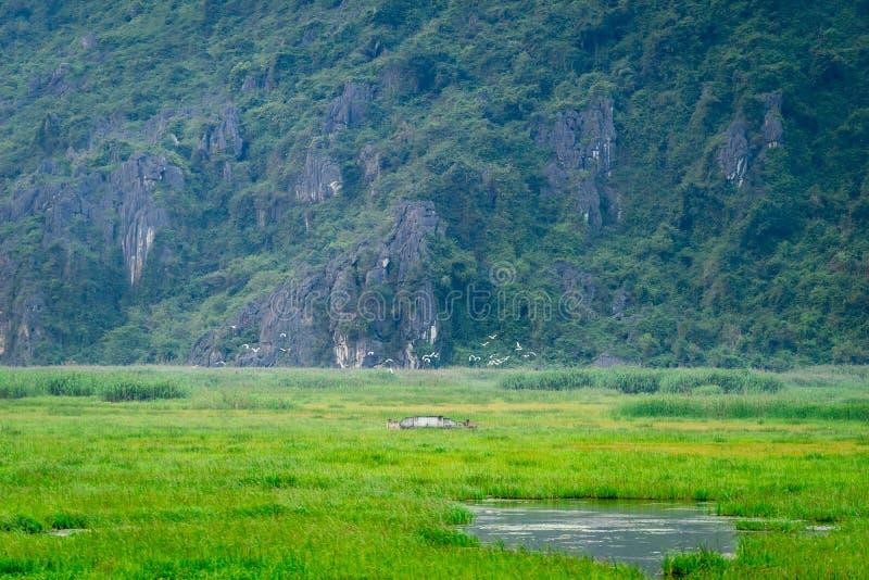Van Long Reserve όπου πάρτε τον κινηματογράφο Kong: IslandVan μακρύς κρανίων στοκ φωτογραφίες με δικαίωμα ελεύθερης χρήσης