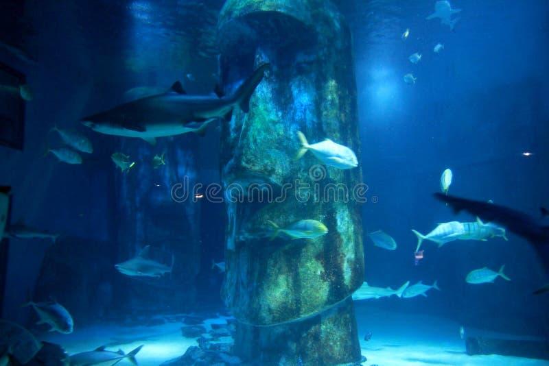 Van overzees het Aquarium het Levenslonden stock foto's