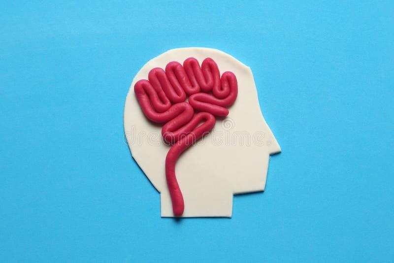 Van plasticinehoofd en hersenen concept Slimme mening, neurologiekennis royalty-vrije stock afbeelding