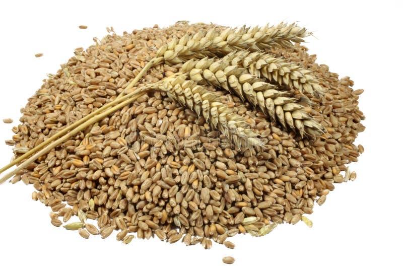 Van tarwekorrels en graangewassen aar Tarwe die op witte achtergrond wordt geïsoleerdr royalty-vrije stock afbeeldingen