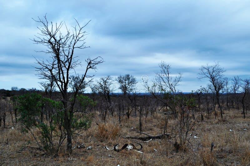 Van van Kruger Nationale Park, Limpopo en Mpumalanga provincies, Zuid-Afrika stock foto's