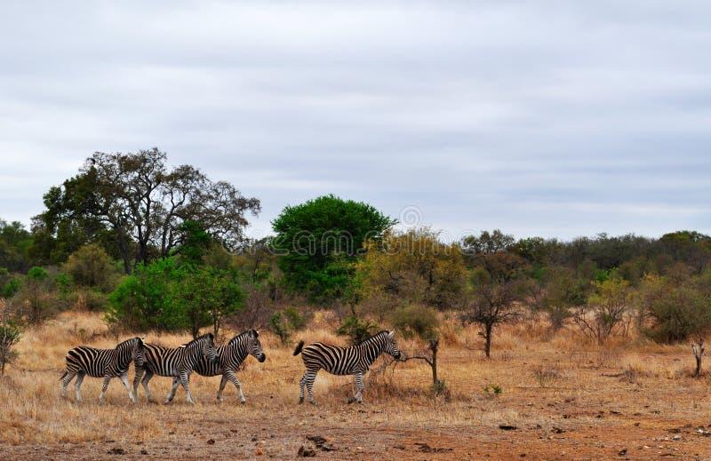 Van van Kruger Nationale Park, Limpopo en Mpumalanga provincies, Zuid-Afrika royalty-vrije stock afbeelding