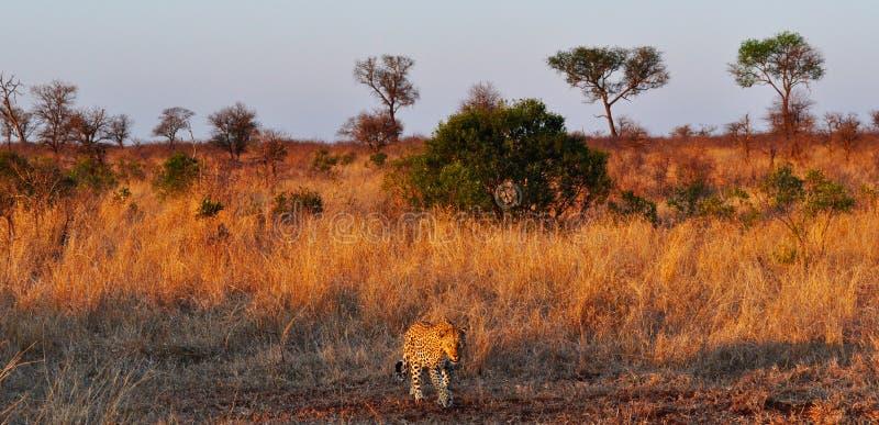 Van van Kruger Nationale Park, Limpopo en Mpumalanga provincies, Zuid-Afrika stock afbeeldingen